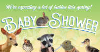 Widlife Baby Shower Facebook Header